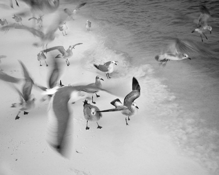 RMRE_Wanless_MaryDorsey_Seagulls-in-Flight-#18_Web_EX_7_14