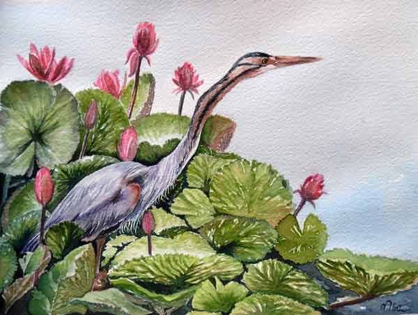 Nimesha Udani_Purple Heron